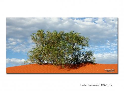 An Outback Bush