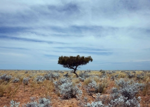 Nullarbor Tree (IMG_1376)